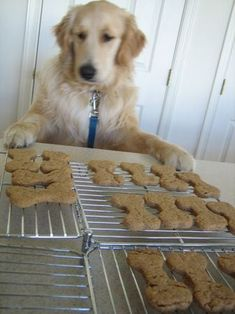 Doggie treats!  Ingredients: 2 cups whole-wheat flour 1 Tablespoon baking powder 1 cup natural peanut butter 1 cup low-fat milk