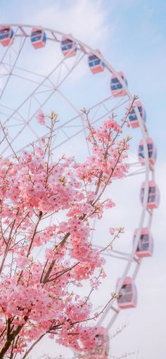 Pink Flower and Ferris Wheel wallpaper Pink Flower aesthetic and Ferris Wheel in beautiful garden. Pink Flower and Ferris Wheel wallpaper Pink Flower aesthetic and Ferris Wheel in beautiful garden. Aesthetic Pastel Wallpaper, Aesthetic Backgrounds, Aesthetic Wallpapers, Aesthetic Pastel Pink, Frühling Wallpaper, Flower Phone Wallpaper, Wallpaper Pink Cute, Iphone Spring Wallpaper, Cherry Blossom Wallpaper Iphone