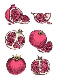 Pomegranate illustration by May van Millingen Pomegranate Drawing, Pomegranate Tattoo, Pomegranate Art, Grenade Fruit, Food Illustrations, Illustration Art, Landscape Illustration, Food Artists, Hades And Persephone