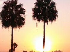 'Sunny embrace' #Hollywood #Sunrise #Los_Angeles