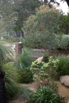 Potfolio: Ashfield Revisit - Mallee Design Australian Garden Design, Australian Native Garden, Lomandra, Hillside Garden, Native Gardens, Native Australians, Plant Design, Native Plants, Landscape Design