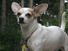 This is a picture of my dog! she is a mix!!