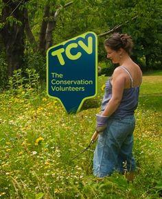 TCV steak