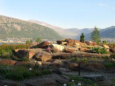 One of the most Northern garden in the world; Arctic-Alpine Botanic Garden, Tromso, Norway