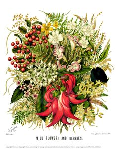 Pix For > Botanical Drawings Of Flowers