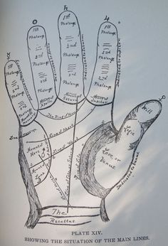 1902 The Science of Palmistry by Dr. Carl by OldDominionOddities