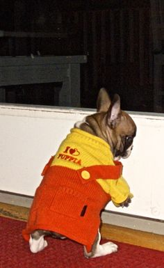 """""""Well if they won't take me out to pee, I'll just do it myself!"""", funny French Bulldog Puppy ❤️"""