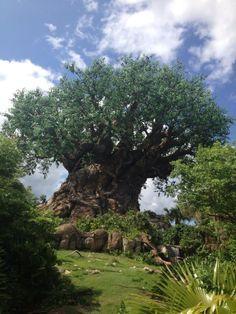 Tree of Life Animal Kingdom, Disneyworld, Florida, USA
