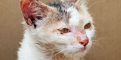 Find and prosecute those monsters who put a firecracker into a cat´s mouth and lit it in Algeria!!!