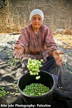 :::: ✿⊱╮☼ ☾ PINTEREST.COM christiancross ☀❤•♥•* ::::Palestinian Olive