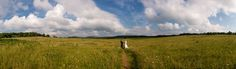 On top of the Shenandoah sits a large open expanse of land called Big Meadows and it's the perfect place for a mountain wedding next to the clouds! Shenandoah National Park, Perfect Place, Destination Wedding, How To Memorize Things, National Parks, Country Roads, Clouds, Weddings, Big
