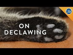"""In the state of Massachsetts, like many other states, it is perfectly legal to declaw your cat. Pet owners tend to pay for this inhumane procedure to prevent a cat from scratching them or their belongings. """"Onychectomy, popularly known as declawing, is an operation to remove an animal's claws surgically by means of the amputation of all or part of the distal phalanges, or end bones, of the animal's toes."""" """"Contrary to most people's understanding, declawing consists of amputating not just…"""