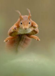 Fotógrafo faz imagens incríveis ganhando a confiança de animais selvagens