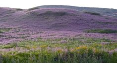 Spring flowers, Galilee.
