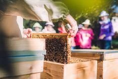 Bez včiel by chýbalo ovocie a zelenina, ale aj koreniny a oleje. Ako chrániť opeľovače? - Akčné ženy Ale, Ale Beer, Ales, Beer