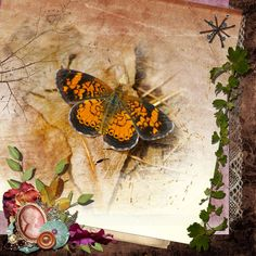 Tiny Butterfly Beauty.  Pearl Crescent Butterfly