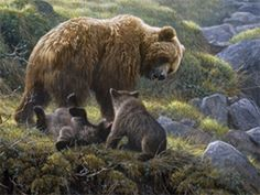 """Grizzly and Cubs is a perfect Robert Bateman artwork to make into a 400 piece Family Puzzle. """"The little grizzly cubs are doing what comes naturally to almost all young things - they are playing Grizzly Bear Cub, Bear Cubs, Bears, Wildlife Art, Animal Paintings, Spirit Animal, Jigsaw Puzzles, Drawings, Artist"""