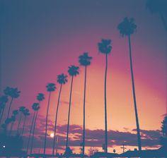 Los Angeles Palms | by Jon N Witt via Flickr