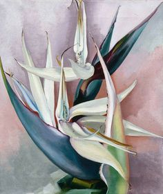 "reumar: "" Perfectly Chaotic Georgia O'Keeffe, White Bird of Paradise, Oil on canvas, 19 x Georgia O'Keeffe Museum. Gift of Jean H. © Georgia O'Keeffe Museum Paintings by O'Keeffe. Modigliani, Georgia O'keeffe, Wisconsin, Santa Fe, Georgia O Keeffe Paintings, Women Artist, Hawaii Pictures, Alfred Stieglitz, New York Art"