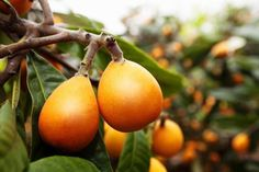 Seven fruit trees you can grow from seeds – The Handy Mano Fruit Tree Garden, Garden Trees, Fruit Trees, Growing Greens, Growing Plants, Growing Vegetables, Growing An Avocado Tree, Kinds Of Fruits, Weed Seeds