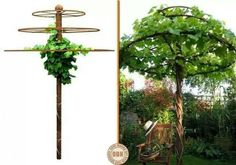 The Garden Geeks    Options for this story  Crafty Corner: Turn your climber (this is a grape vine) into a tree! Thanks for sharing Laurie!