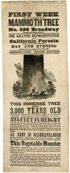 September 25, 1890:  Sequoia National Park is established in California by the United States Congress.  Broadside, First week of the great exhibition of the mammoth tree at No. 596 Broadway immediately adjoining Niblo's. New-York Historical Society Library [ummm @shoomlah !!]