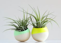 Spring Mini Air Plant Pod Set of 2 - Neon Yellow and Pale Mint