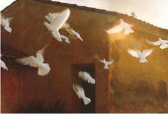David Hamilton, Envol de colombes, Ramatuelle, 1969