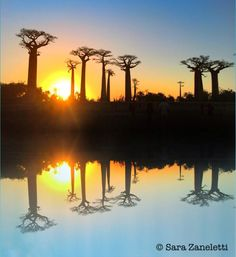 From my last trip to #Madagascar #baobabs #alleedesbaobabs #reflections