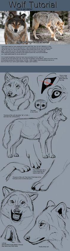 Wolf Tutorial by TheMysticWolf on @DeviantArt