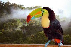http://www.reisenews-online.de/pics/tukan-im-regenwald-costa-ricas/