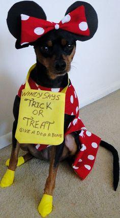 Halloween Photo Contest: Minnie Pin