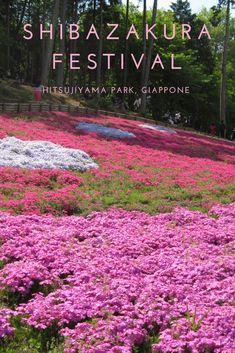 Il Parco Hitsujiyama nella prefettura di Saitama ogni anno a maggio si tinge di rosa! In questo articolo vi spiego come arrivare e cosa fare al festival degli shibazakura, questi graziosi fiorellini che ricoprono prati e colline!