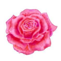 draw a rose flower