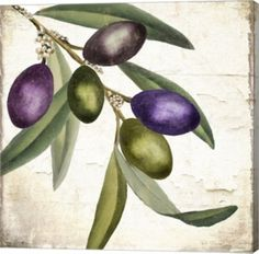 Trademark Art 'Olive Branch I' by Color Bakery Painting Print on Wrapped Canvas My Canvas, Canvas Artwork, Canvas Size, Painting Prints, Fine Art Prints, Olive Tree, Kitchen Art, Metal Wall Art, Graphic Art