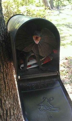 Put a surprise in the mailbox.