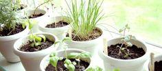 Mantenha-se saudável! Plante sua própria horta em casa! http://www.bibeli.com.br/post-interna/plante-sua-propria-horta-em-casa