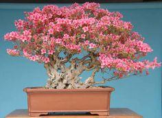 paisagens em bandeja de bonsai - Tìm với Google