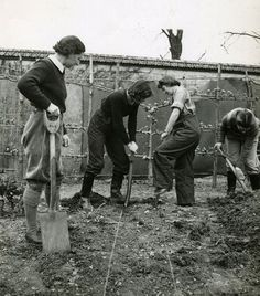 Land Girls digging for victory.