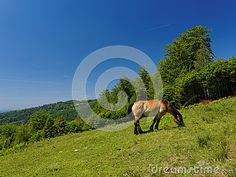 Horse in meadow in countryside