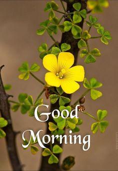 Good Morning Friends Images, Happy Good Morning Quotes, Good Morning Beautiful Images, Good Morning Roses, Morning Greetings Quotes, Good Morning Picture, Good Morning Good Night, Morning Messages, Good Morning Wallpaper