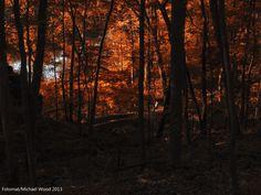 Whisper Wood, Palisades Kepler State Park, Cedar Rapids, Iowa  25mm, f4 at 1/60