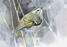 Bird Watercolor Print - Golden-crowned Kinglet, David Scheirer, Etsy