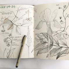 Journal this week. The best part about my perpetual field journal is that each year, the pages grow upon the former year and new observations add to the compositions in ways that I never expect. Botanical Drawings, Botanical Illustration, Botanical Art, Illustration Art, Artist Journal, Art Journal Pages, Art Sketches, Art Drawings, Sibylla Merian
