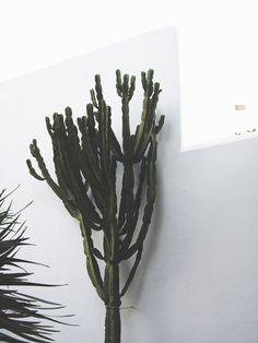 Cacti.