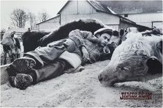 Vintage posters have a special place in photographic history and are available in limited quantities in the Magnum Shop. USA. Fairmount, Indiana. 1955. James Dean with cattle. Age: Printed in 1992 Siz