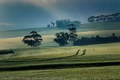 Lone Tree, South Africa, Mountains, Travel, Trips, Viajes, Traveling, Bergen, Outdoor Travel