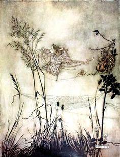 ✽   arthur rackham  -  'peter pan in kensington gardens'