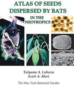 seed dispersal - Pesquisa Google