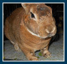 Hooray for Mantle!! #rabbit #animalrescue #adoptdontshop